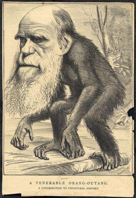 caricatura darwin orangutan