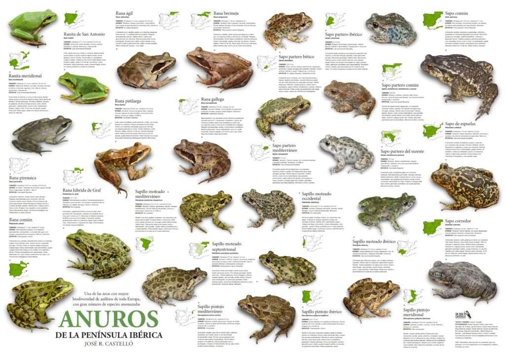 poster descargable ranas sapos