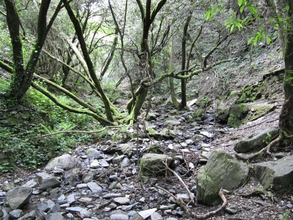 bosque del montseny catalunya bosc