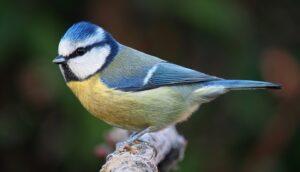 10 aves urbanas que tienes que conocer
