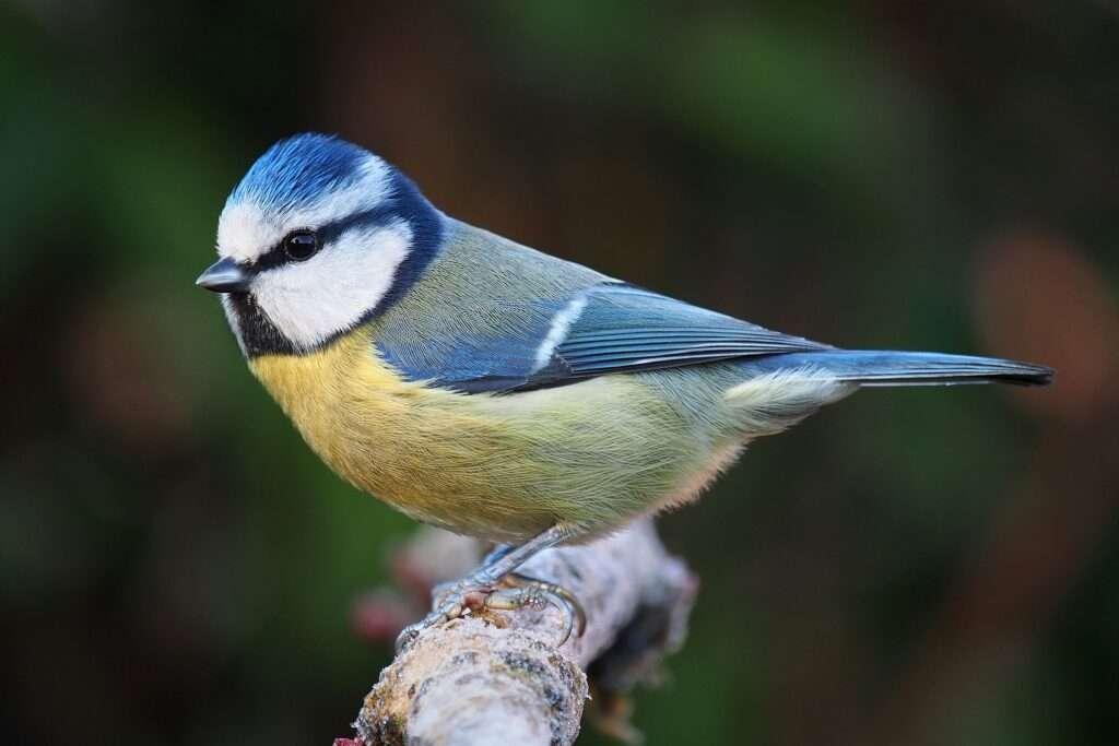 aus urbanes aves urbanas tipos de pajaros ocells portada