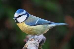 10 aus urbanes que has de conèixer