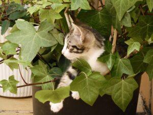 40 Plantas tóxicas para gatos