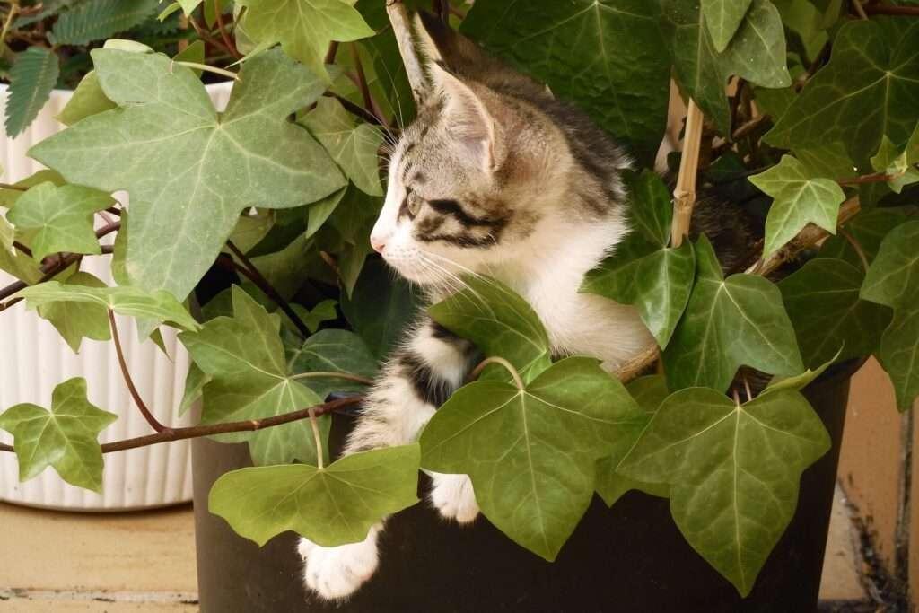 hiedra tóxica gato portada