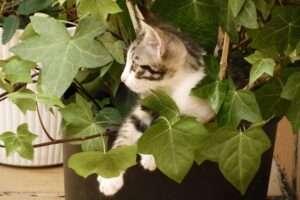 40 plantes tòxiques per a gats