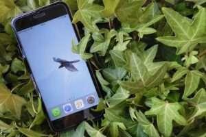 Las mejores aplicaciones gratuitas para descubrir la naturaleza