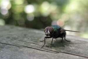 Tipus d'artròpodes: no tots els bitxos són insectes