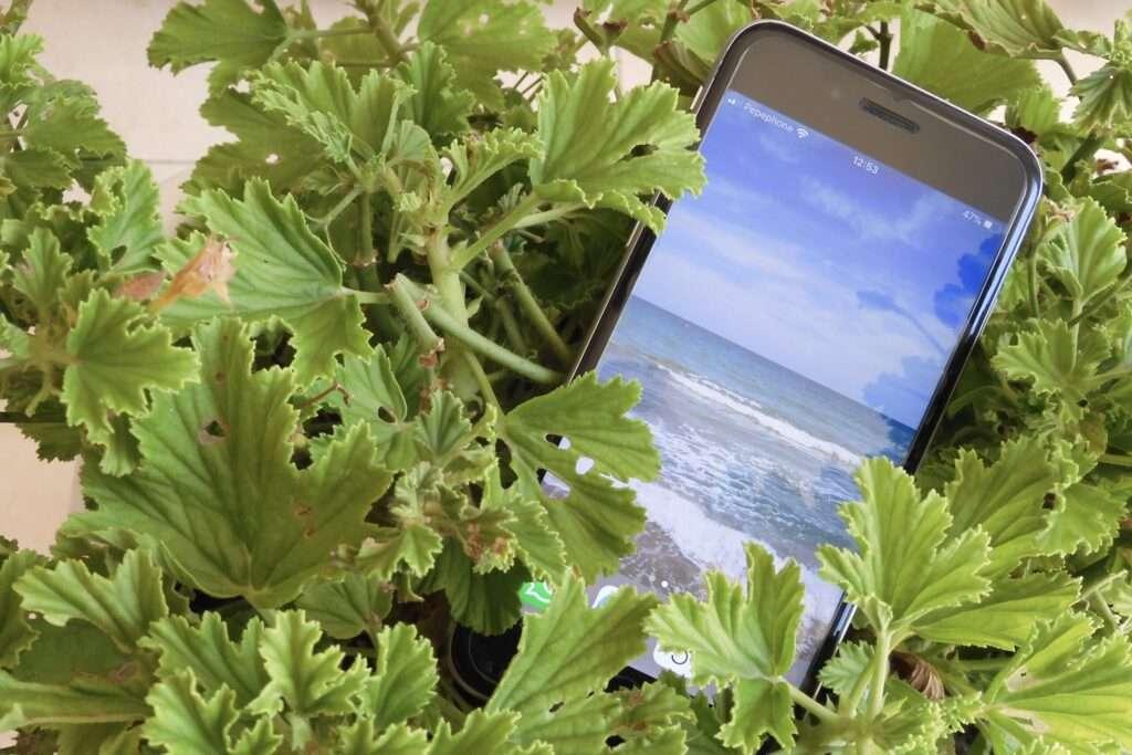 movil fondo plantas apps ciencia ciudadana