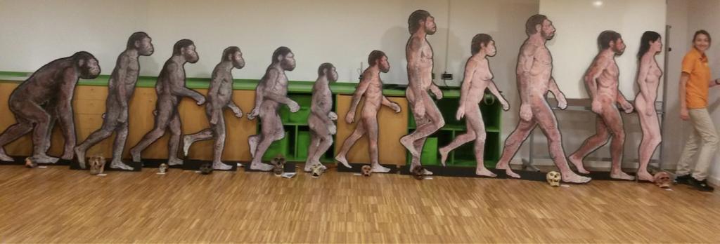 linia evolutiva, mireia querol rovira, evolució humana pas a pas, cosmocaixa