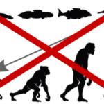 «Venimos del mono» y otros falsos mitos sobre la evolución