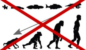 """""""Venim del mico"""" i altres falsos mites sobre l'evolució"""