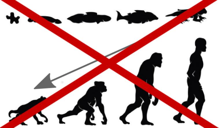 """""""Venim del mico"""" i altres mites sobre l'evolució"""