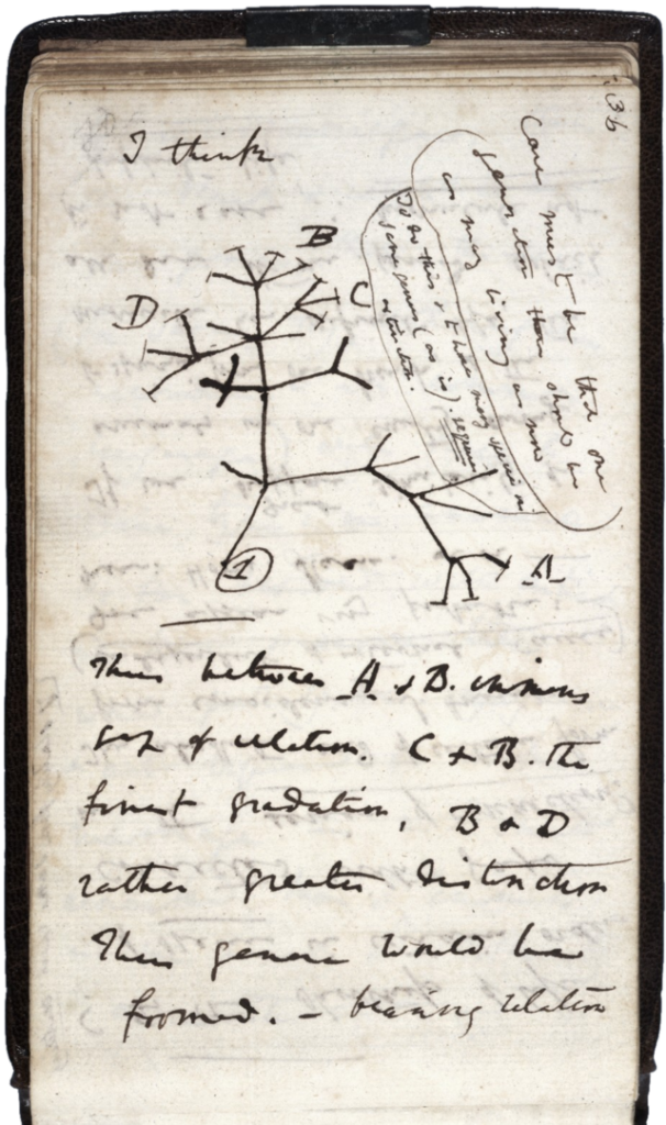 esquema arbre darwin
