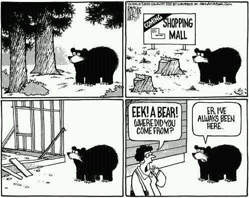 viñeta oso centro comercial