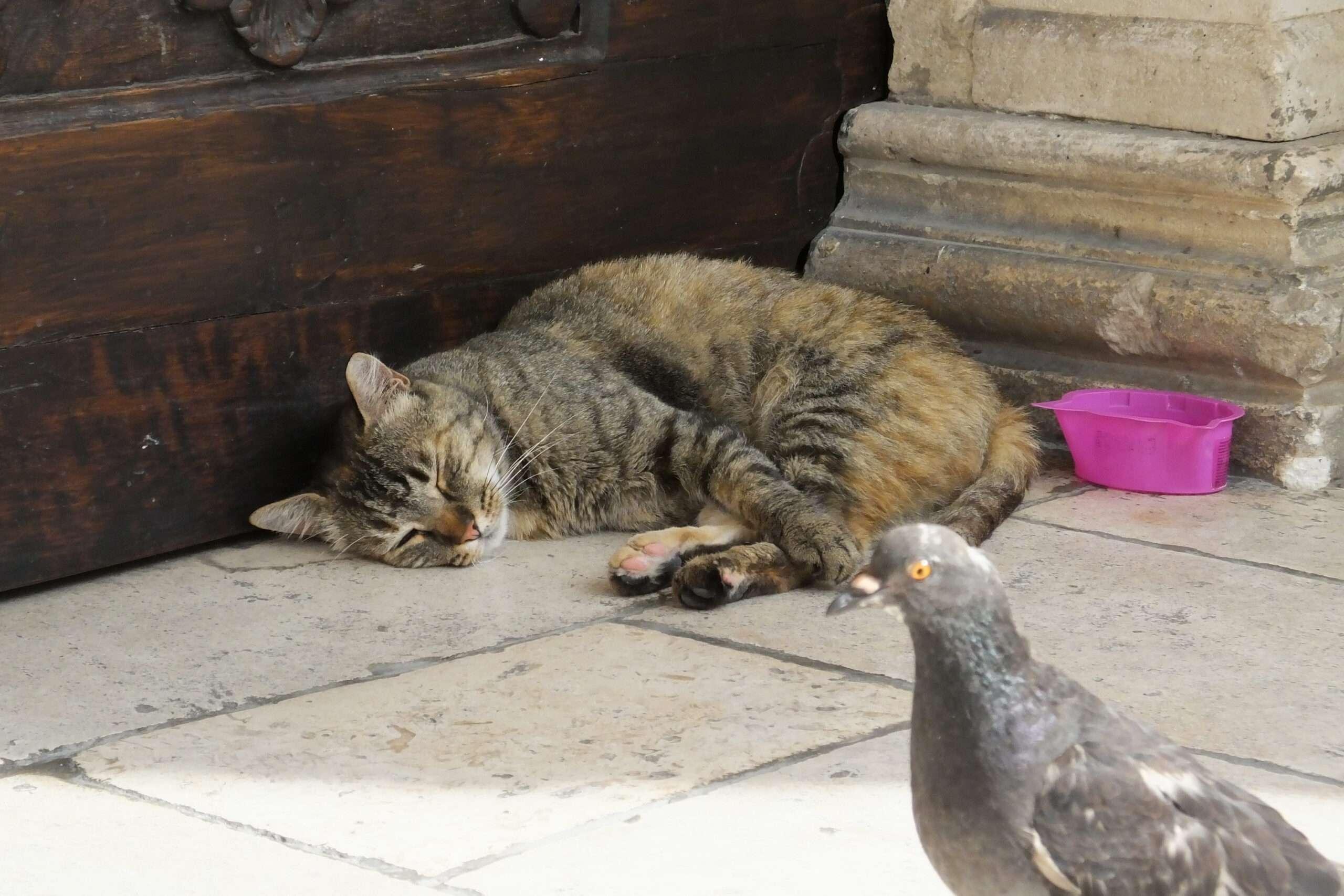 Conflictos con fauna en ambientes urbanos