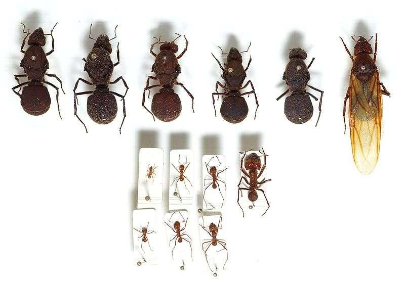 simbiosis hormigas sociales