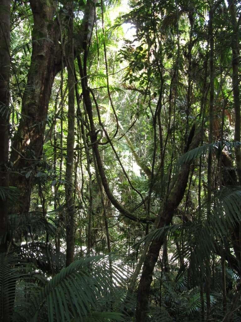 simbiosis selva competencia luz