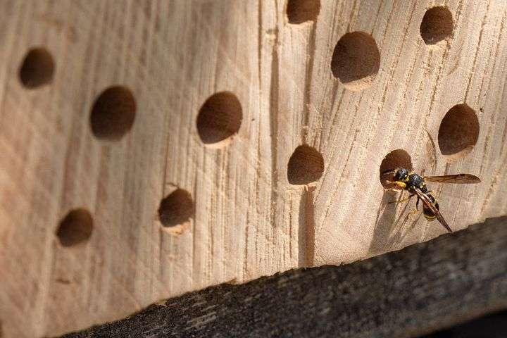 hotel para insectos casero