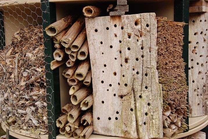 cañas virutas de madera troncos agujereados