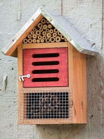 hotel insectos caja roja crisopas