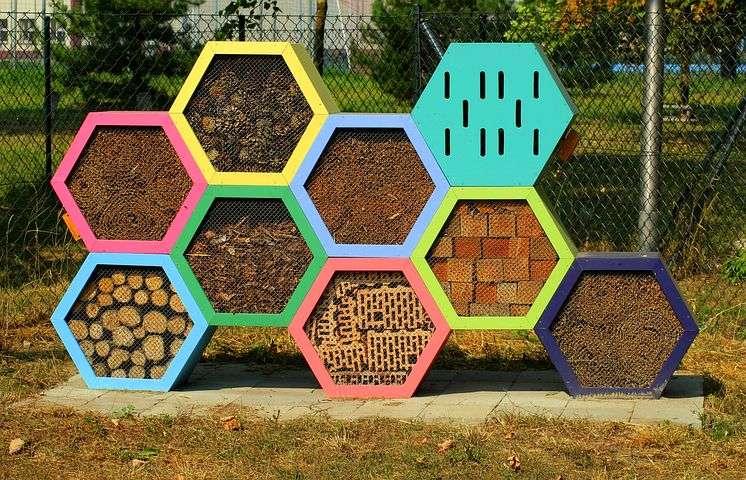 hotel insectos diseño hexagonos colores