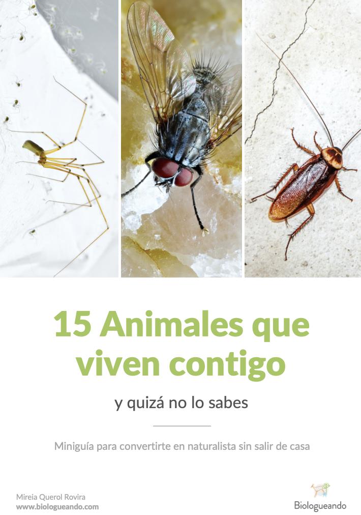 animales que viven en casa