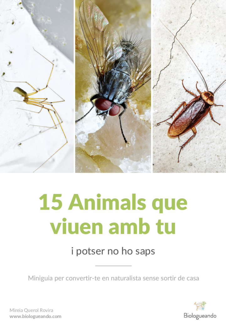 animals que viuen a casa