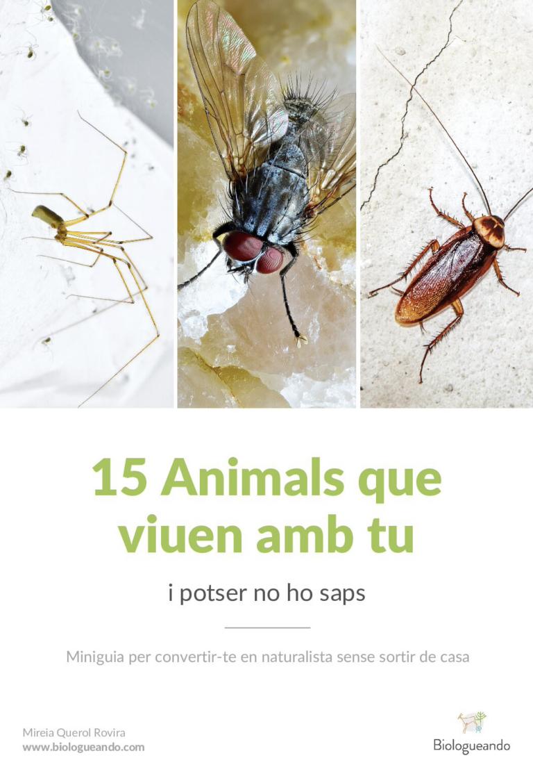 animals que viuen a casa