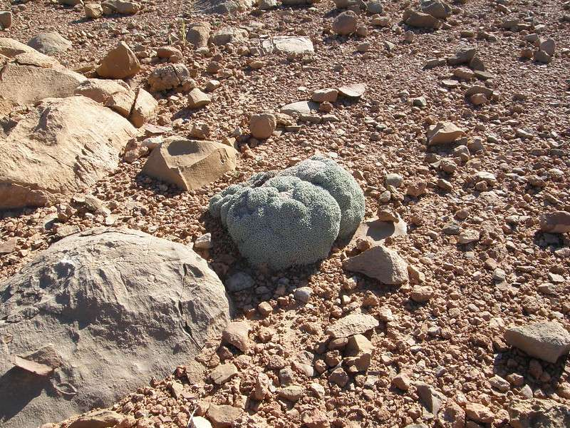 roca viva en el desierto