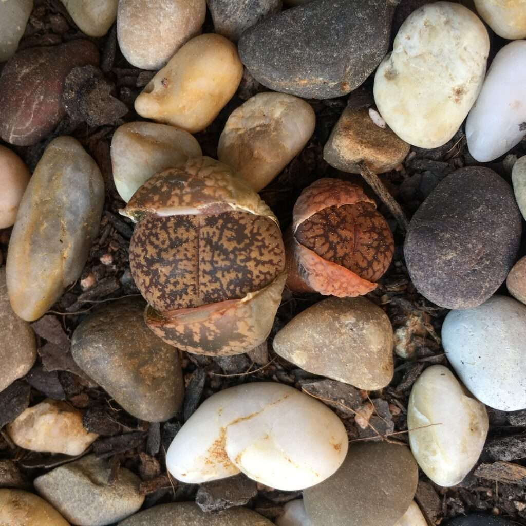 rocas vivas pequeñas