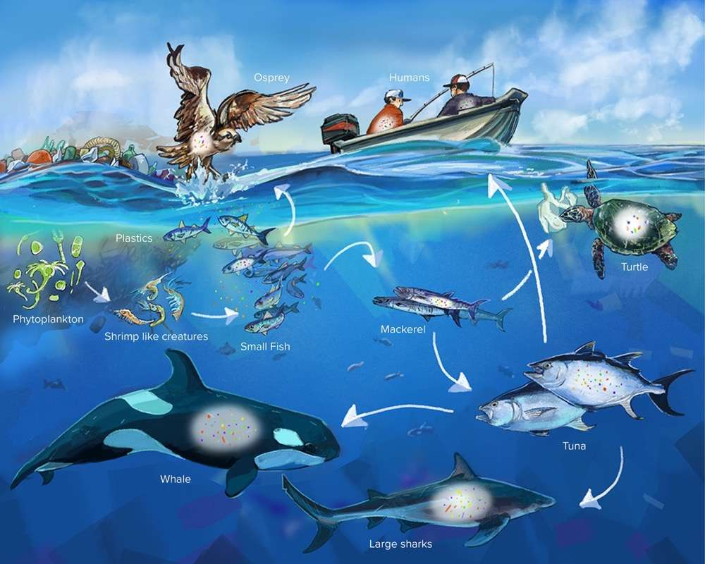 cadena red trofica oceano tiburon
