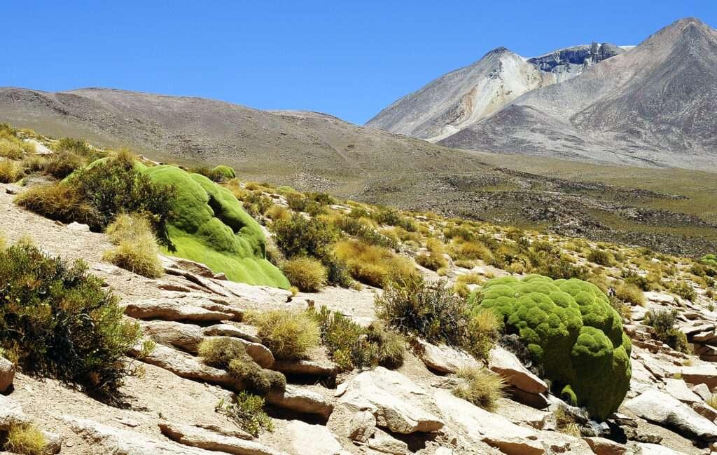 paisaje montañas andes llareta planta altitud