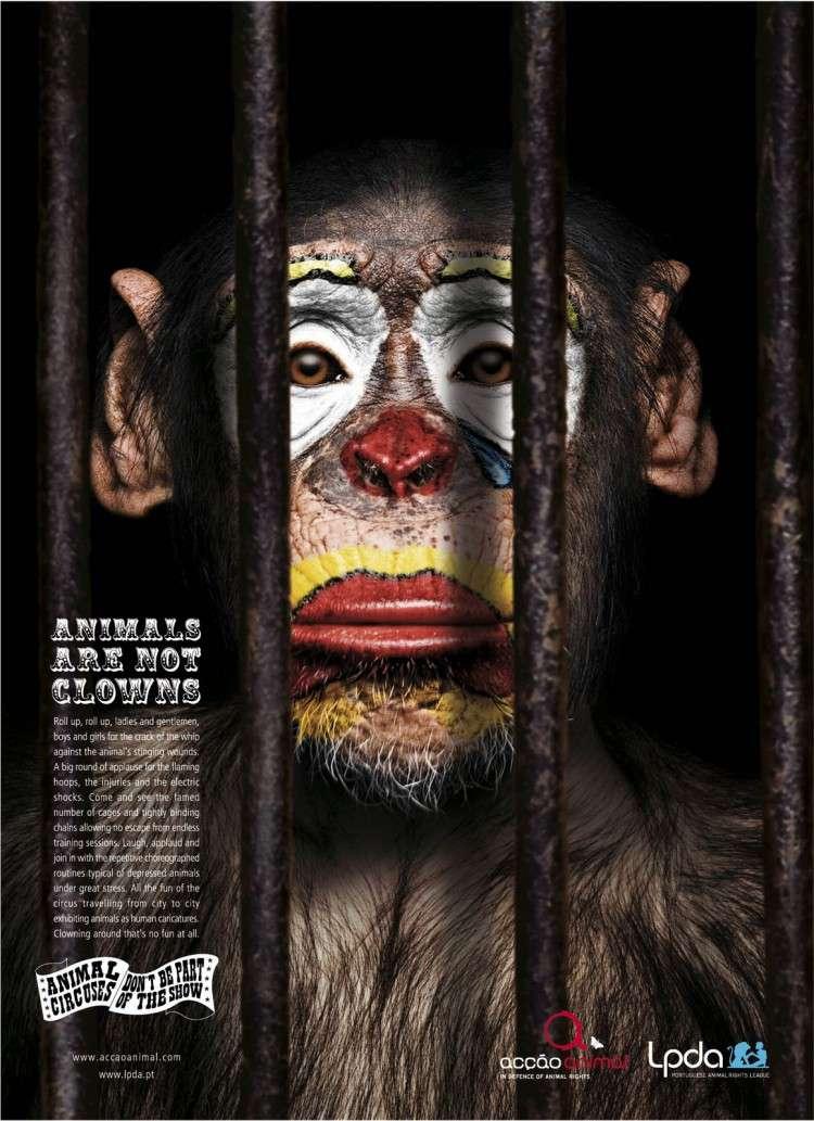captividad en primates