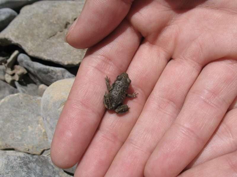 error naturaleza coger anfibios con la mano granota petita