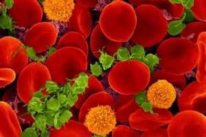 Lee más sobre el artículo Los colores de la sangre van del rojo al violeta pasando por el arco iris